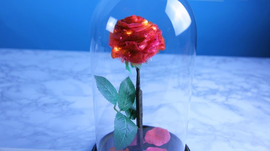 Enchanted rose TN 3